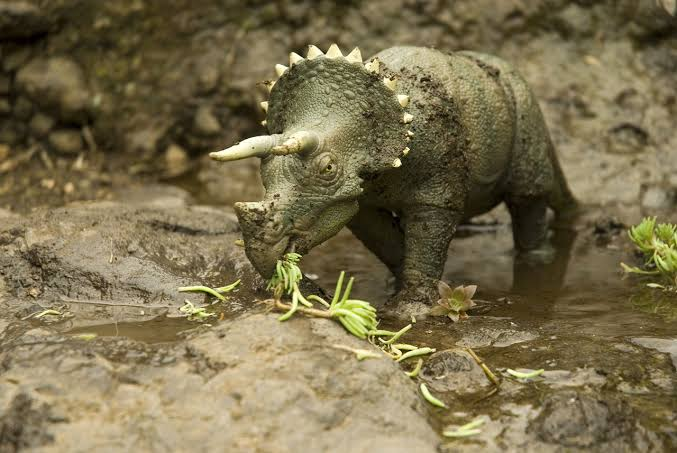 A Triceratops is Eating Plants