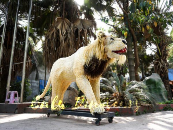 An Adult Animatronic Lion in a Roaring Stance
