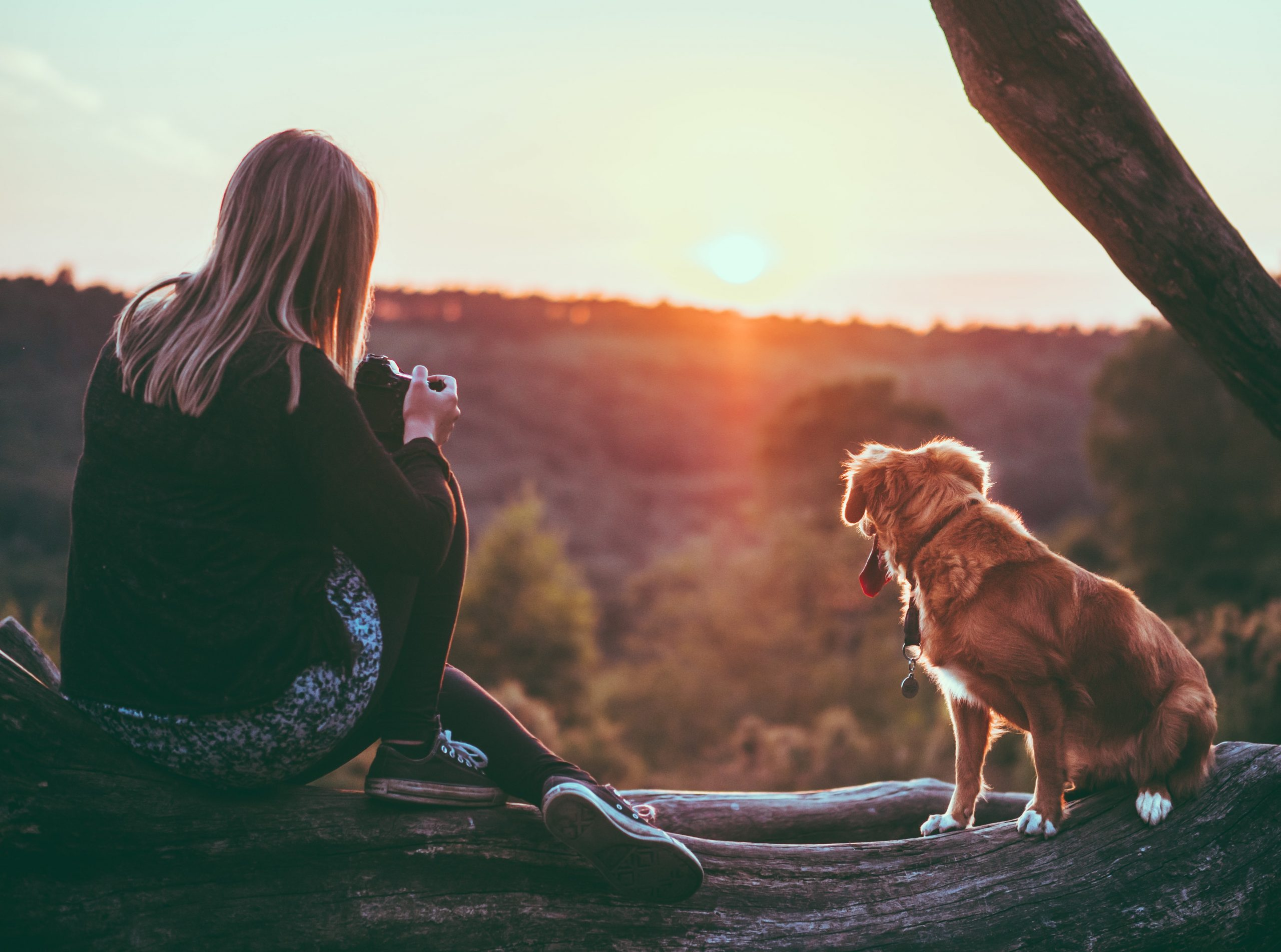A Woman and a Dog at a Field Looking at the Sunset