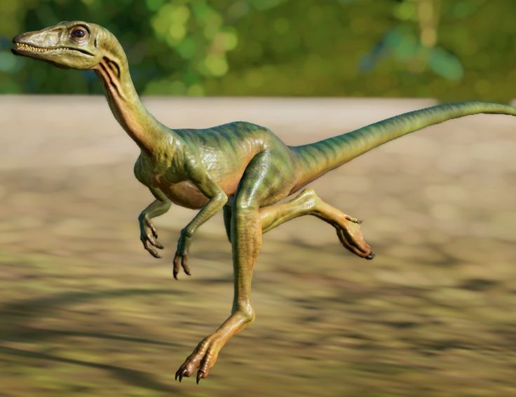 Compsognathus on the Ground