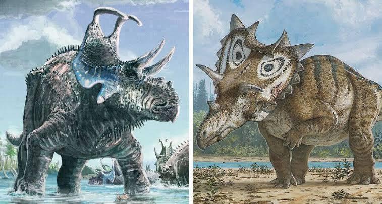 Different Triceratops Species