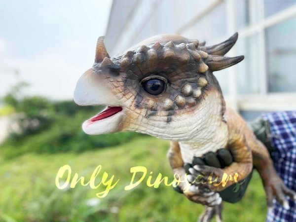 A Brown Baby Pachycephalosaurus