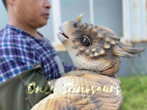 A Man and a Brown Baby Pachycephalosaurus