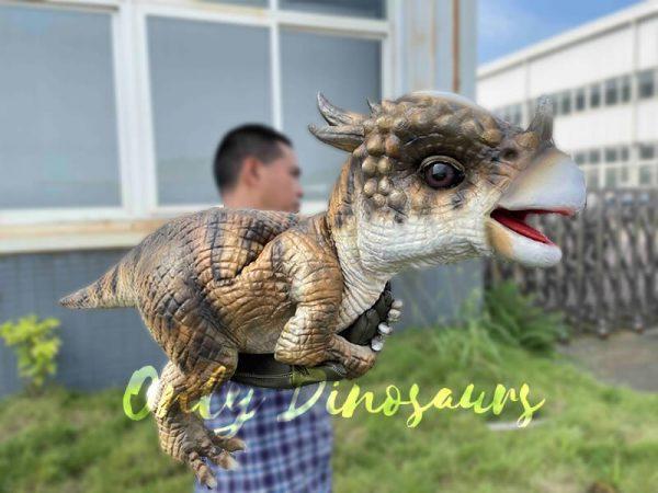 A Brown Baby Pachycephalosaurus on the False Arm