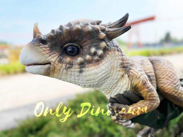The Head of a Brown Baby Pachycephalosaurus
