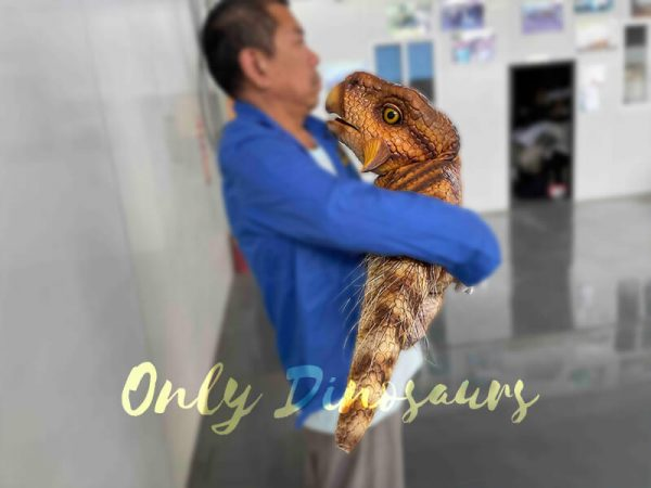 A Man Carrying a Brown Baby Psittacosaurus with Feathered