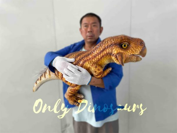 A Man Carrying a Brown Baby Psittacosaurus
