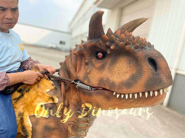 The Head of a Carnotaurus