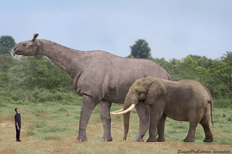 Human, Elephant and Paraceratherium in the Ground