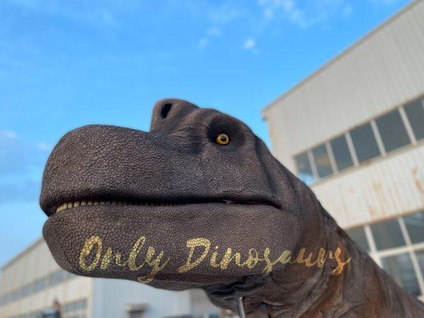 The Brachiosaurus Head