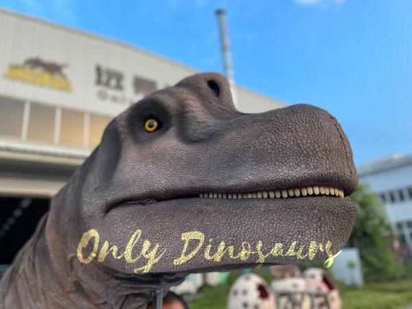 A Brachiosaurus Head