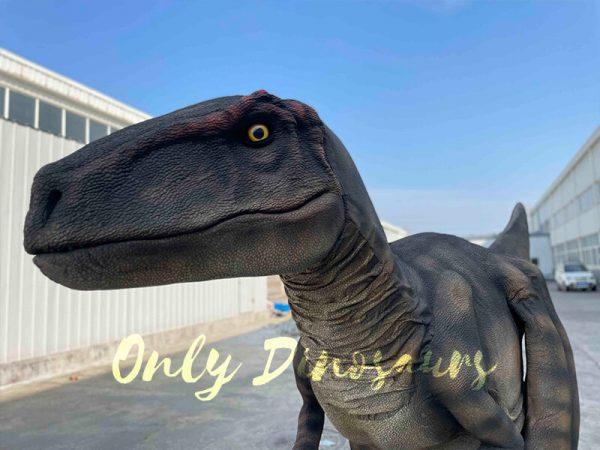 The Head of Brown Raptor