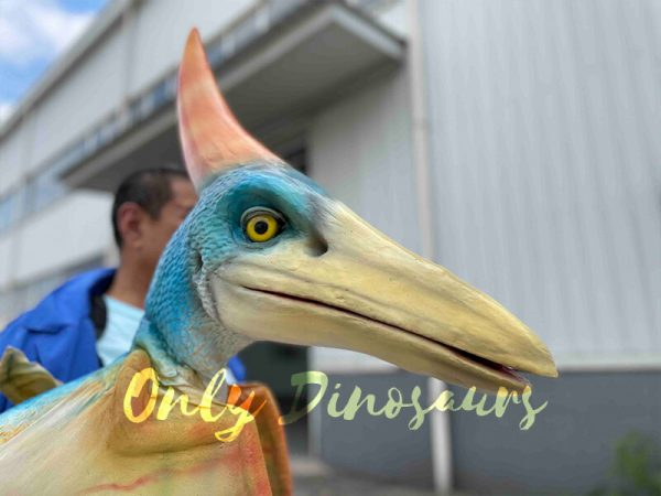 The Head of a Colorful Baby Pterosaur