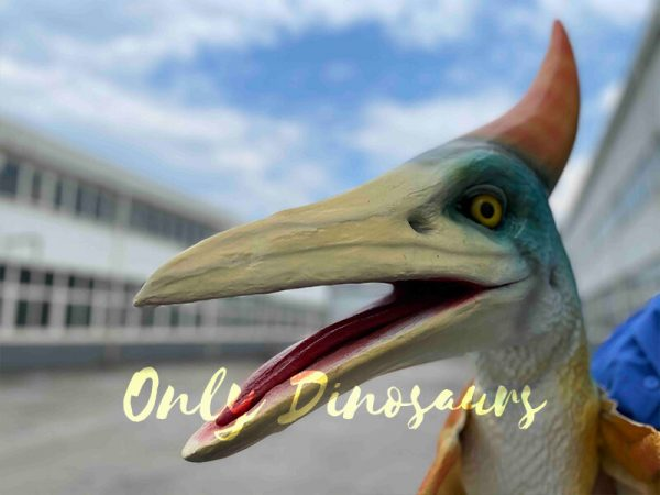 The Head of the Colorful Baby Pterosaur