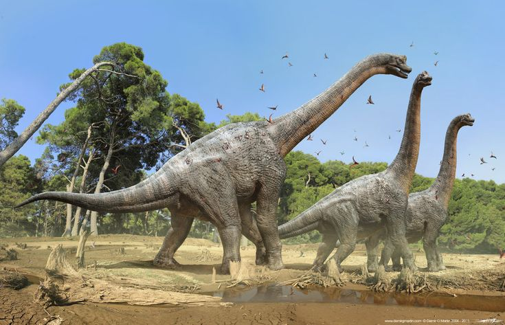 Several Brachiosaurus Walking in Herd