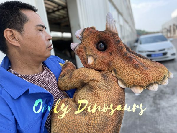 Triceratops being held