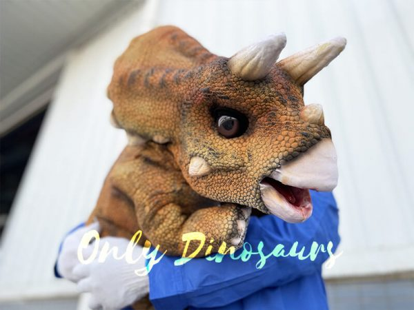 Triceratops with its probe