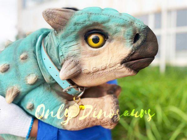 The Head of a Blue Baby Ankylosaur