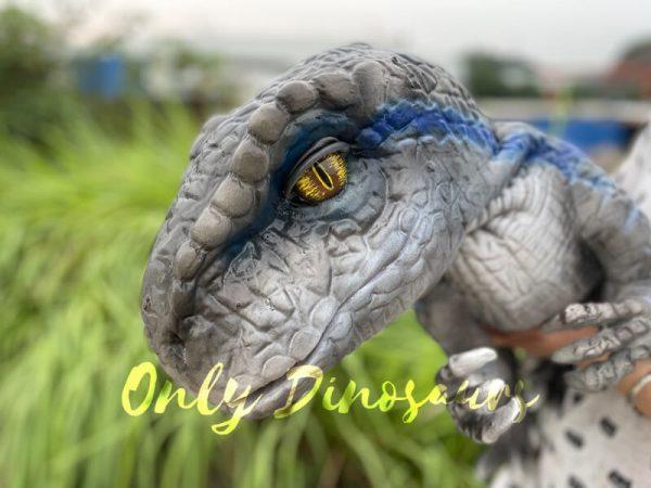 A Grey Baby Raptor with Blue Stripes Head
