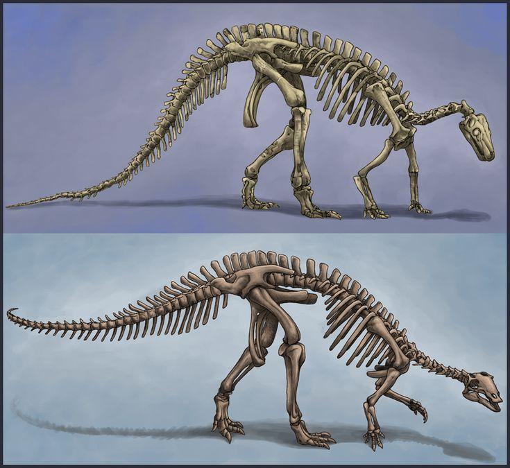 Two Camptosaurus Skeletons