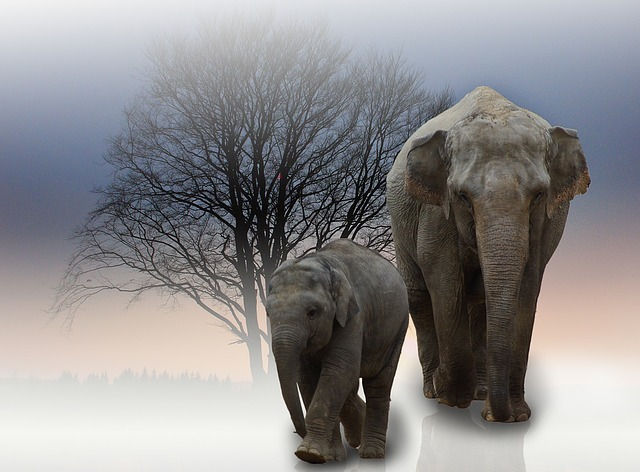 Two Elephants with a Beautiful Background