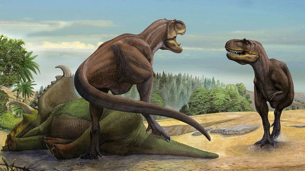 Two T Rex Are Frighting for Food