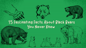 15 Fascinating Facts About Black Bears You Never Knew