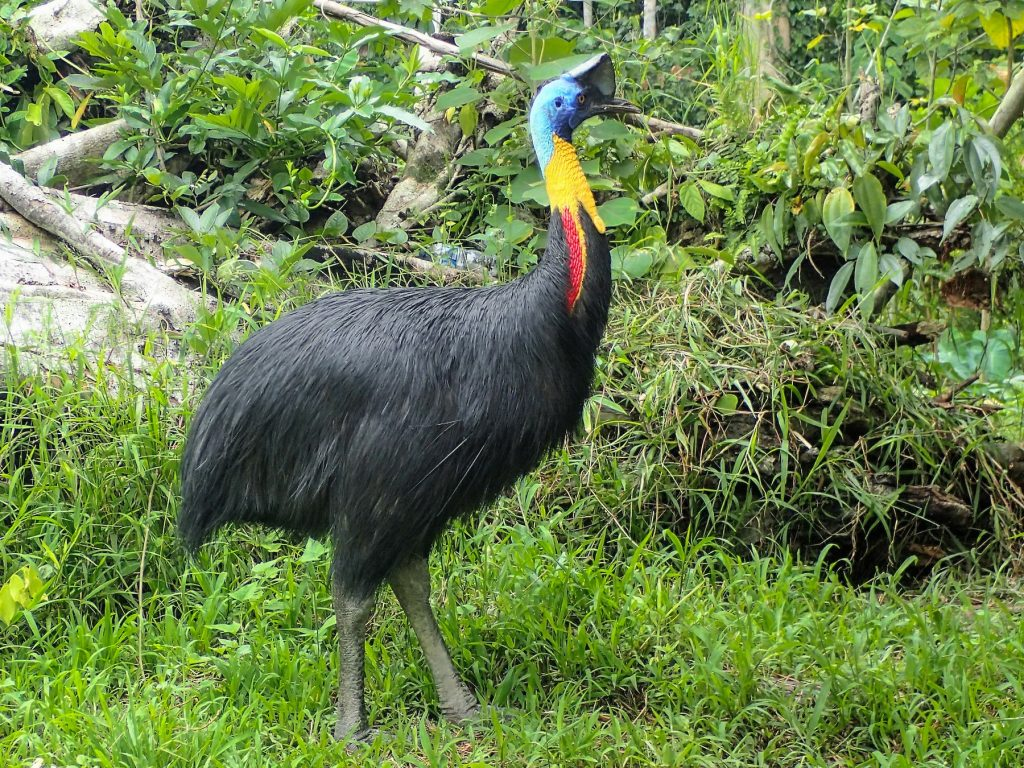 a giant bird with black feathers on the glass