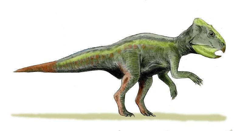 small green dinosaur with an orange tail