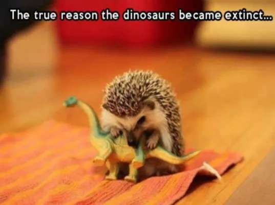 A Hedgehog is Playing a Dinosaur Toy