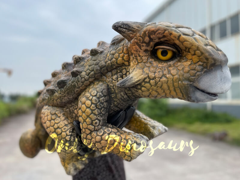 A Human is Holding a Brown Ankylosaurus