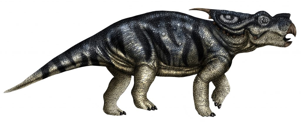 graphic art of a black striped dinosaur with two horns on its frill