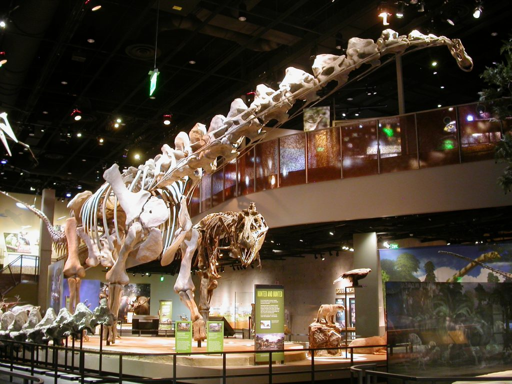 skeleton of a giant long-necked herbivore on display beside a T. rex