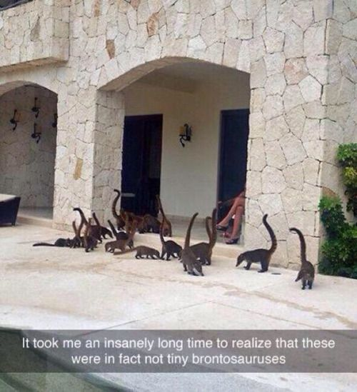 Animals Looks Like Brontosauruses in Front of the Hource
