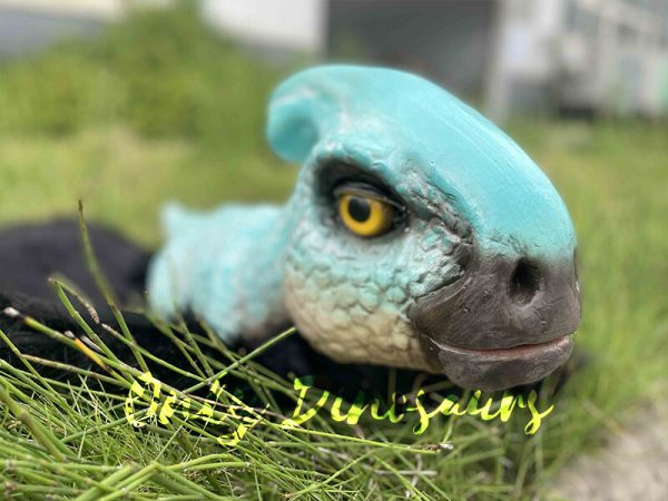 A recent photo of the baby Parasaurus