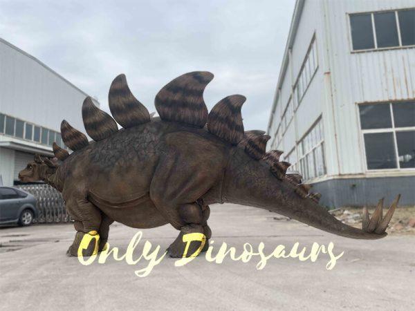 The Side of Stegosaurus
