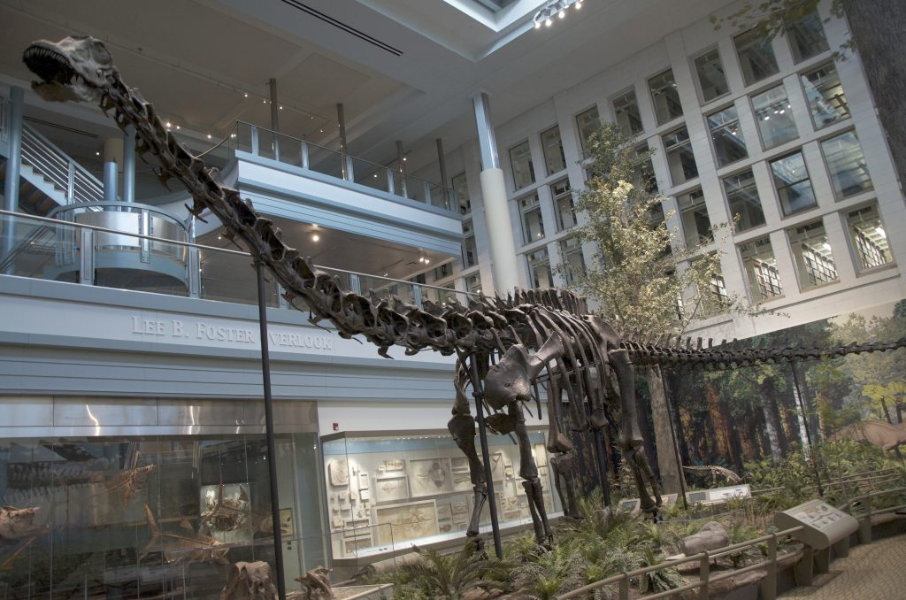 a fossil of a long-necked dinosaur on display with small green plants beside its feet