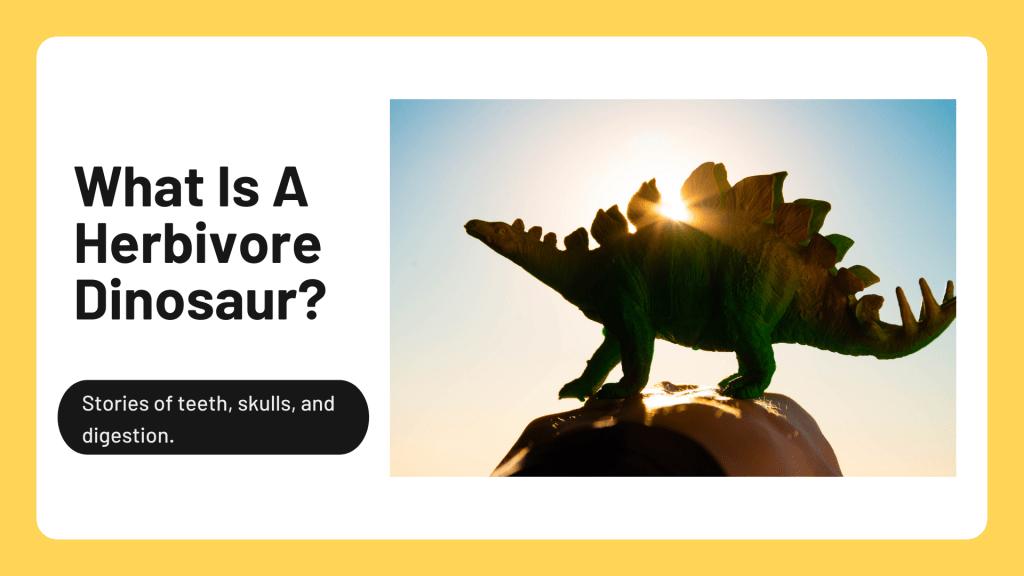What Is a Herbivore Dinosaur?