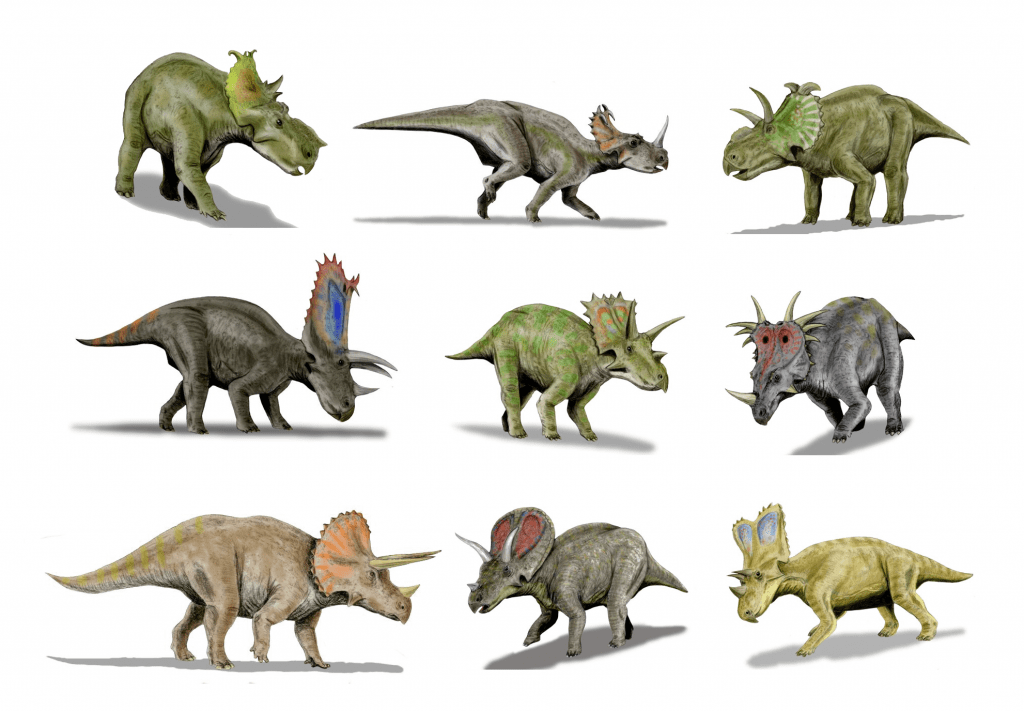 graphic art of nine kinds of Ceratopsids in different colors