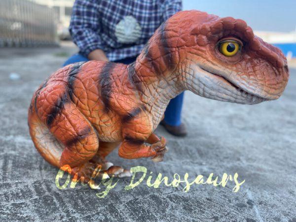An Oragne Baby T-Rex on the Ground