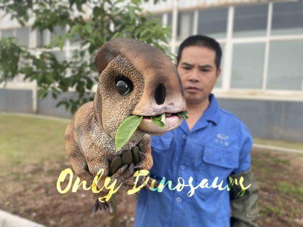 A Man with a dinosaur parasaurolophus puppet