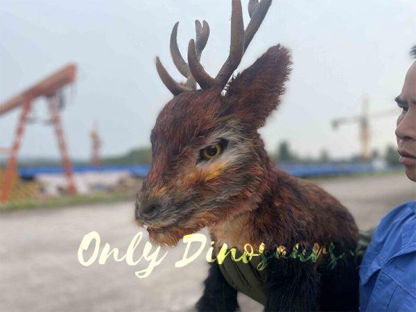 the head of reindeer