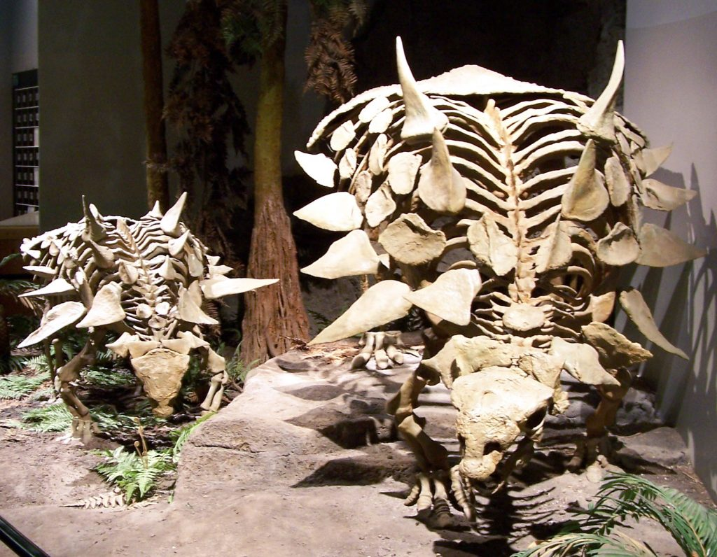 two skeletons of a dinosaur with large spikes on its back