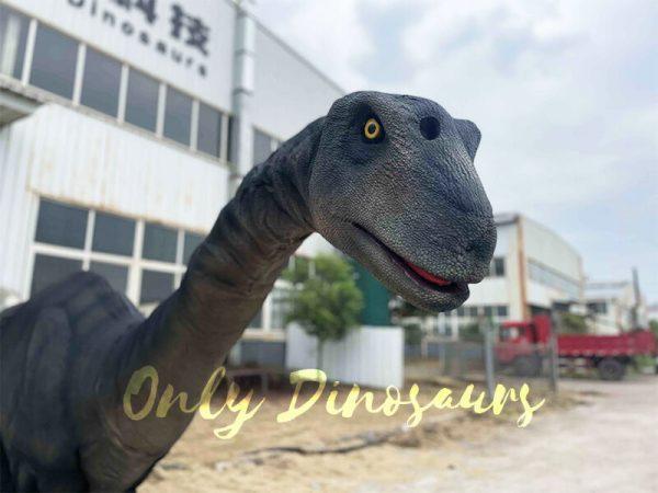 Huge brontosaurus