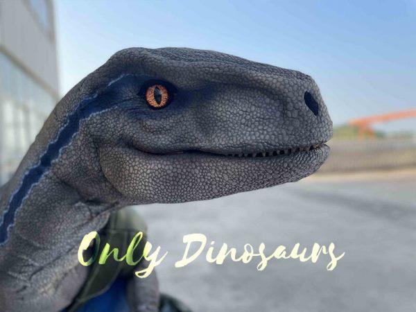 The head of velociraptor