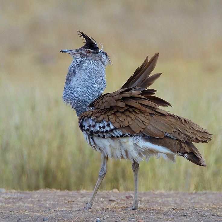 a strange brown bird on the ground