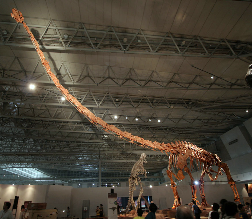 a skeleton of a long necked dinosaur with a spot light on its neck