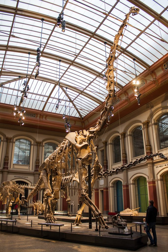 a skeleton of a long necked dinosaur on display with a man standing in front