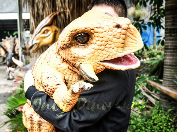 an orange baby Psittacosaurus puppet carried by a man wearing a black sweater