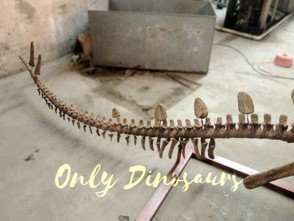 Realistic-Dinosaur-Stegosaurus-Bone